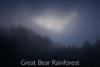 Great Bear Rainforest gallery