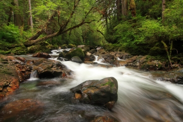 Ahta river, temperate rainforest, September, late summer, British Columbia, Canada