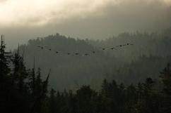 geese,koeye,12-08-110004
